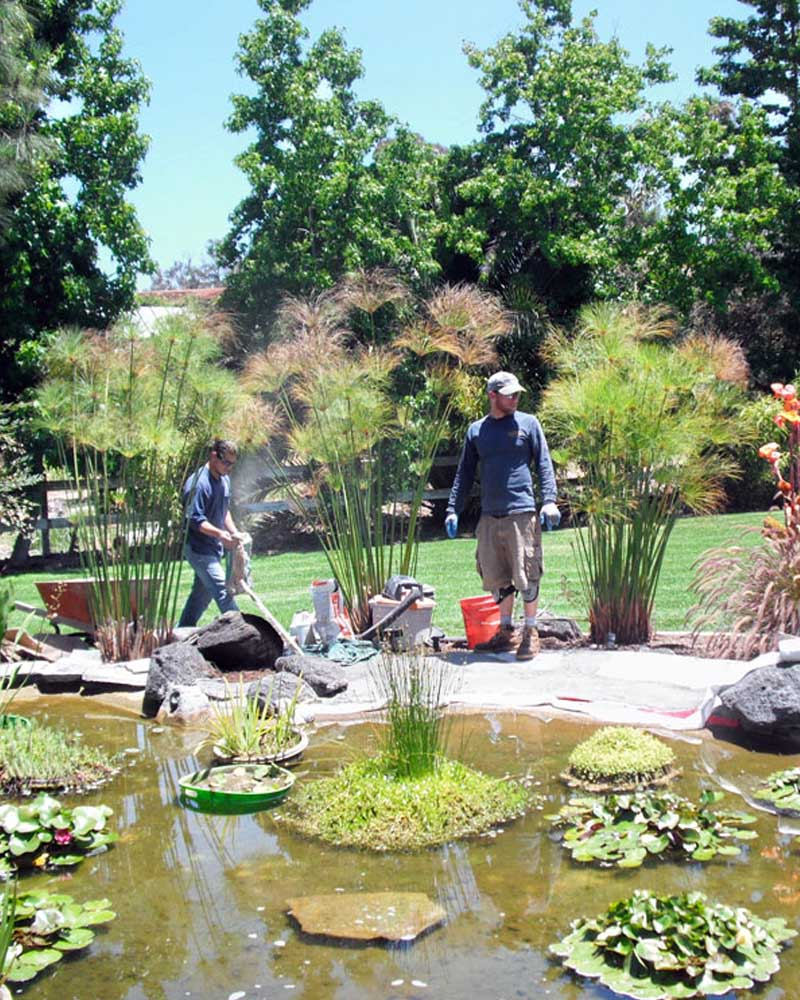 San Diego pond maintenance services will keep your pond healthy and happy.