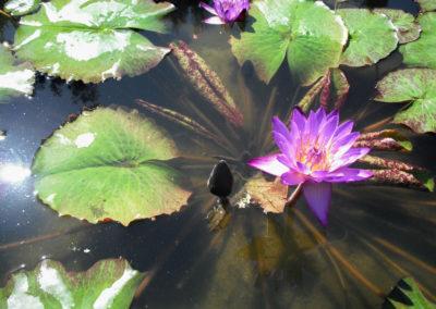 Dragonfly Aquatics